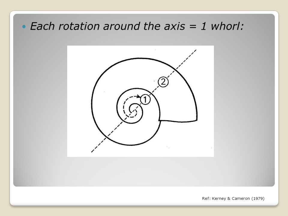 Each rotation around the axis = 1 whorl: Ref: Kerney & Cameron (1979)