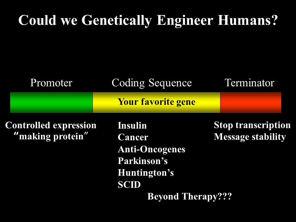 Could we Genetically Engineer Humans.