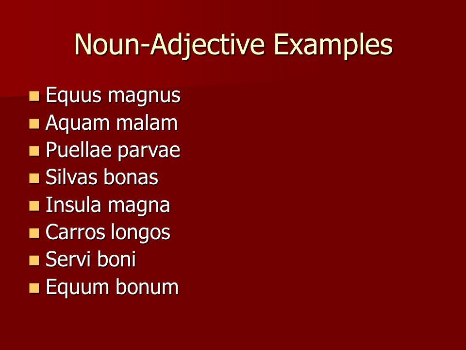 Noun-Adjective Examples Equus magnus Equus magnus Aquam malam Aquam malam Puellae parvae Puellae parvae Silvas bonas Silvas bonas Insula magna Insula magna Carros longos Carros longos Servi boni Servi boni Equum bonum Equum bonum