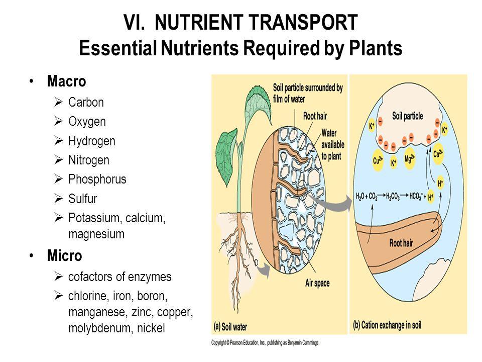VI. NUTRIENT TRANSPORT Essential Nutrients Required by Plants Macro  Carbon  Oxygen  Hydrogen  Nitrogen  Phosphorus  Sulfur  Potassium, calcium