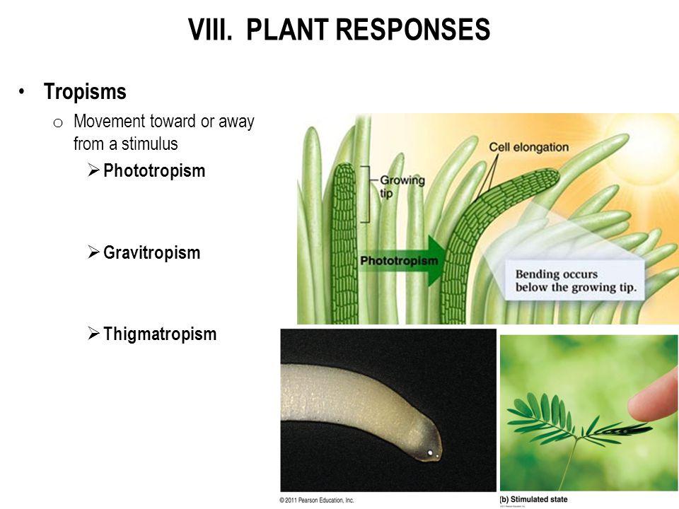 VIII. PLANT RESPONSES Tropisms o Movement toward or away from a stimulus  Phototropism  Gravitropism  Thigmatropism