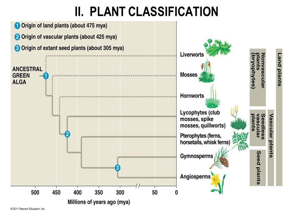 II. PLANT CLASSIFICATION