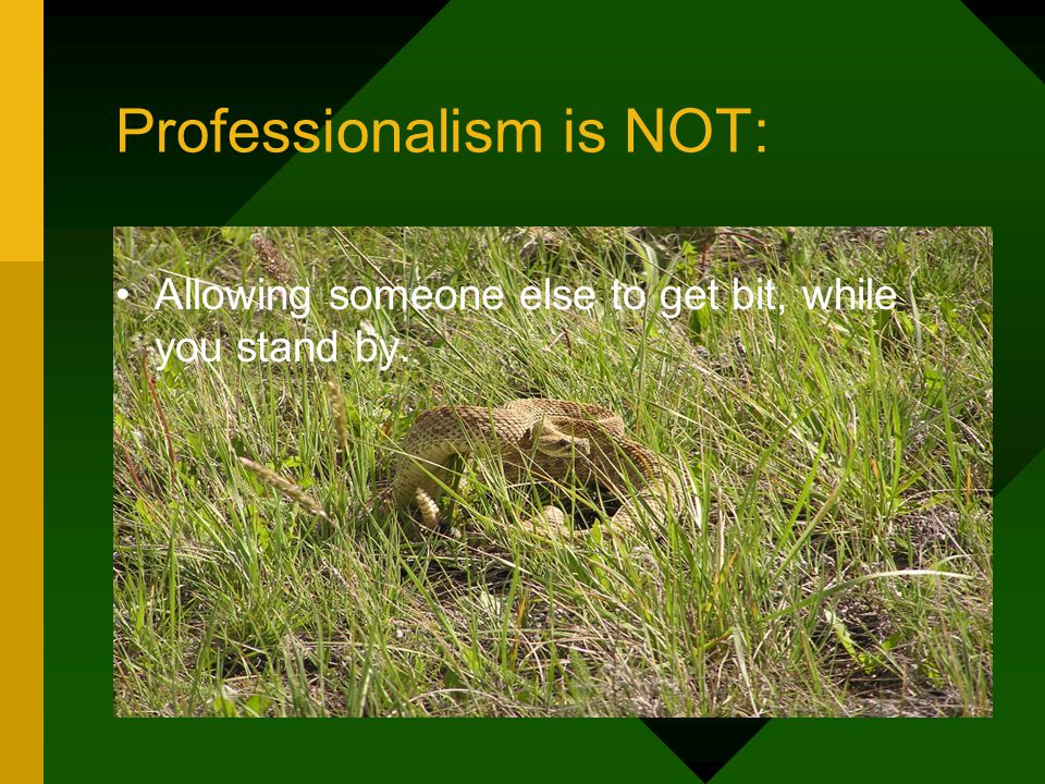 Professionalism is NOT: Allowing someone else to get bit, while you stand by.