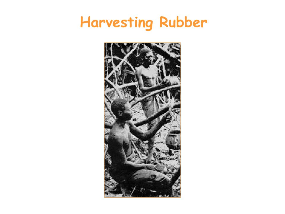 Harvesting Rubber