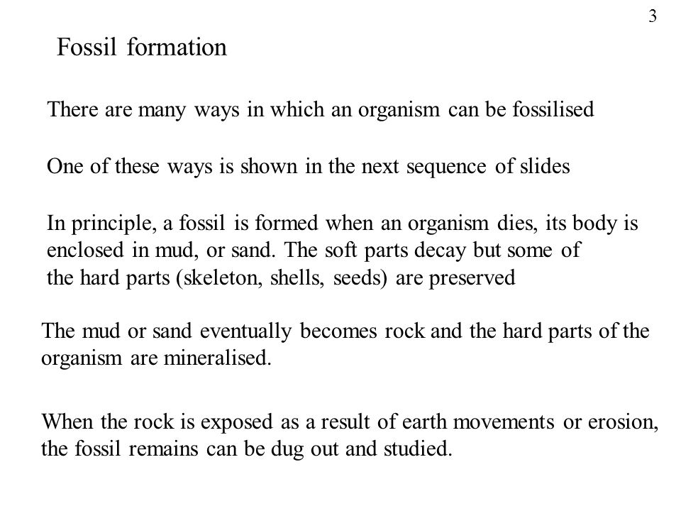 There are many ways in which an organism can be fossilised One of these ways is shown in the next sequence of slides In principle, a fossil is formed