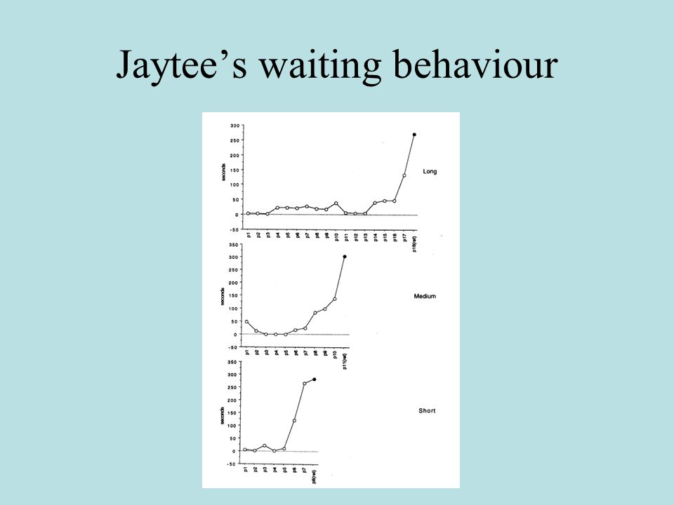 Jaytee's waiting behaviour