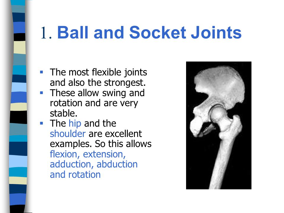 1.Ball and Socket Joints  The most flexible joints and also the strongest.