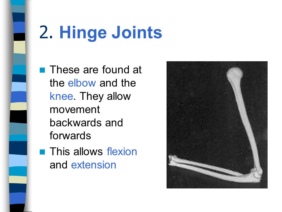 1. Ball and Socket Joints  The most flexible joints and also the strongest.  These allow swing and rotation and are very stable.  The hip and the s