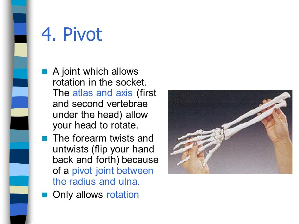 4.Pivot A joint which allows rotation in the socket.