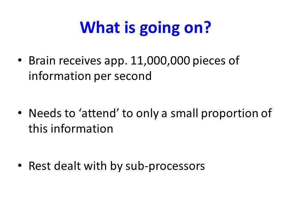 Brain anatomy for beginners..