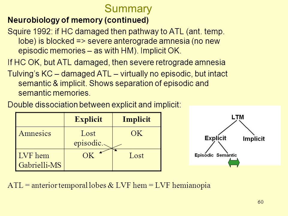 60 Summary Neurobiology of memory (continued) Squire 1992: if HC damaged then pathway to ATL (ant. temp. lobe) is blocked => severe anterograde amnesi