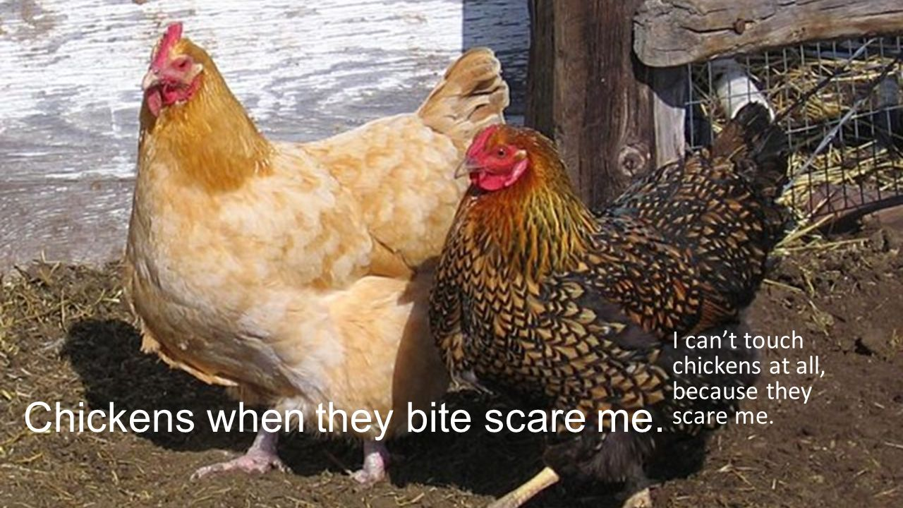 Chickens when they bite scare me. I can't touch chickens at all, because they scare me.