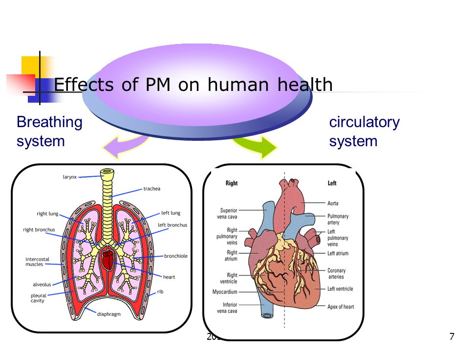 2010 06 17 UK Social Value7 Breathing system 大气颗粒物 对人体健康的影响 circulatory system Effects of PM on human health