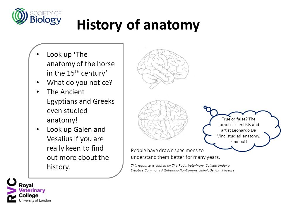 Look up 'The anatomy of the horse in the 15 th century' What do you notice? The Ancient Egyptians and Greeks even studied anatomy! Look up Galen and V