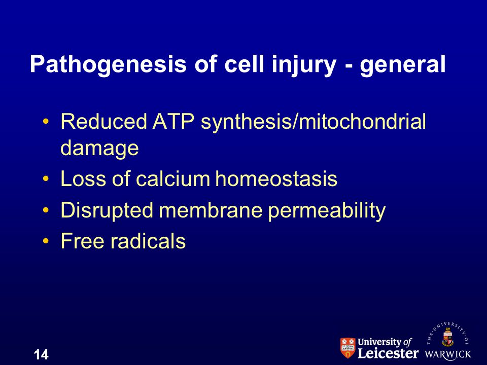 14 Pathogenesis of cell injury - general Reduced ATP synthesis/mitochondrial damage Loss of calcium homeostasis Disrupted membrane permeability Free r