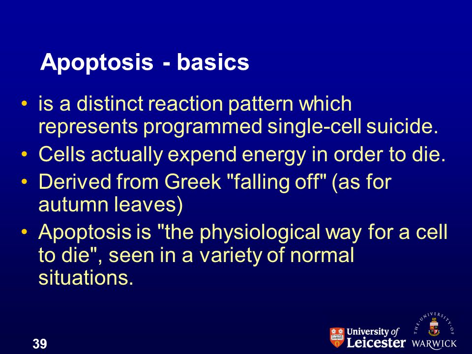 39 Apoptosis - basics is a distinct reaction pattern which represents programmed single-cell suicide. Cells actually expend energy in order to die. De