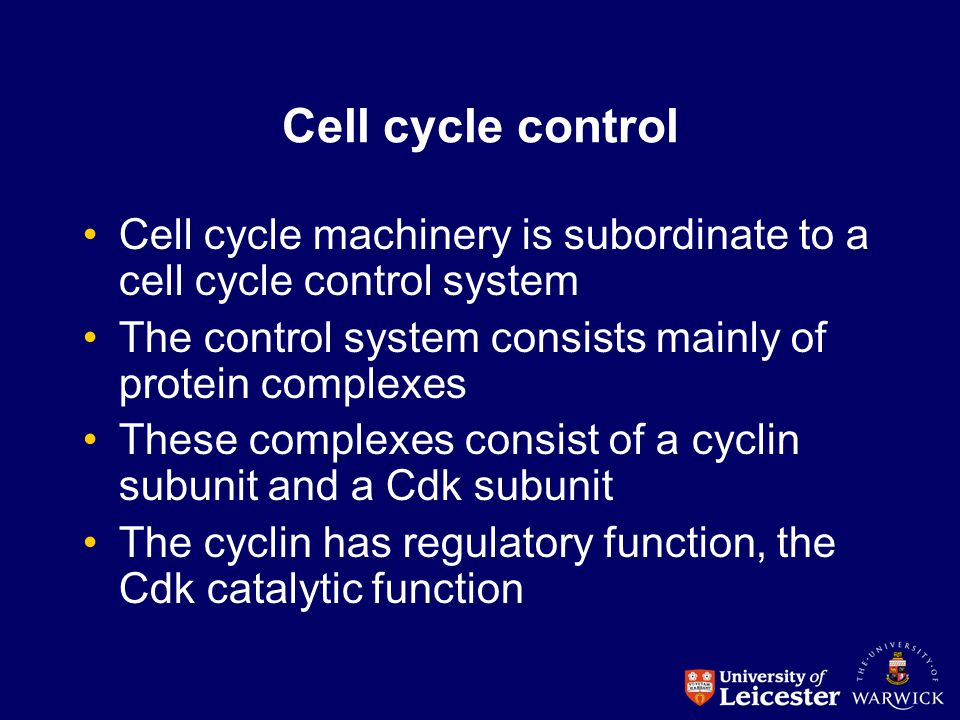 Cell cycle control Cell cycle machinery is subordinate to a cell cycle control system The control system consists mainly of protein complexes These co