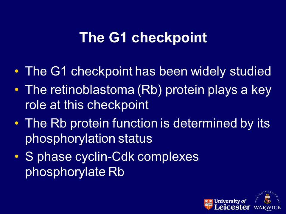 The G1 checkpoint The G1 checkpoint has been widely studied The retinoblastoma (Rb) protein plays a key role at this checkpoint The Rb protein functio