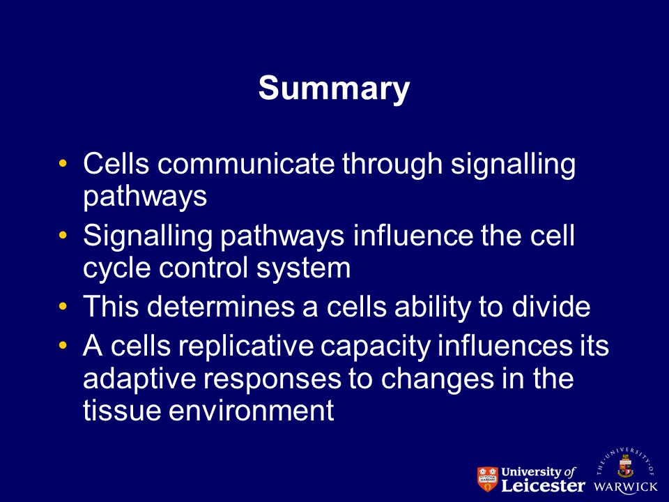 Summary Cells communicate through signalling pathways Signalling pathways influence the cell cycle control system This determines a cells ability to d