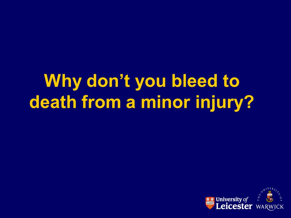 Why don't you bleed to death from a minor injury?