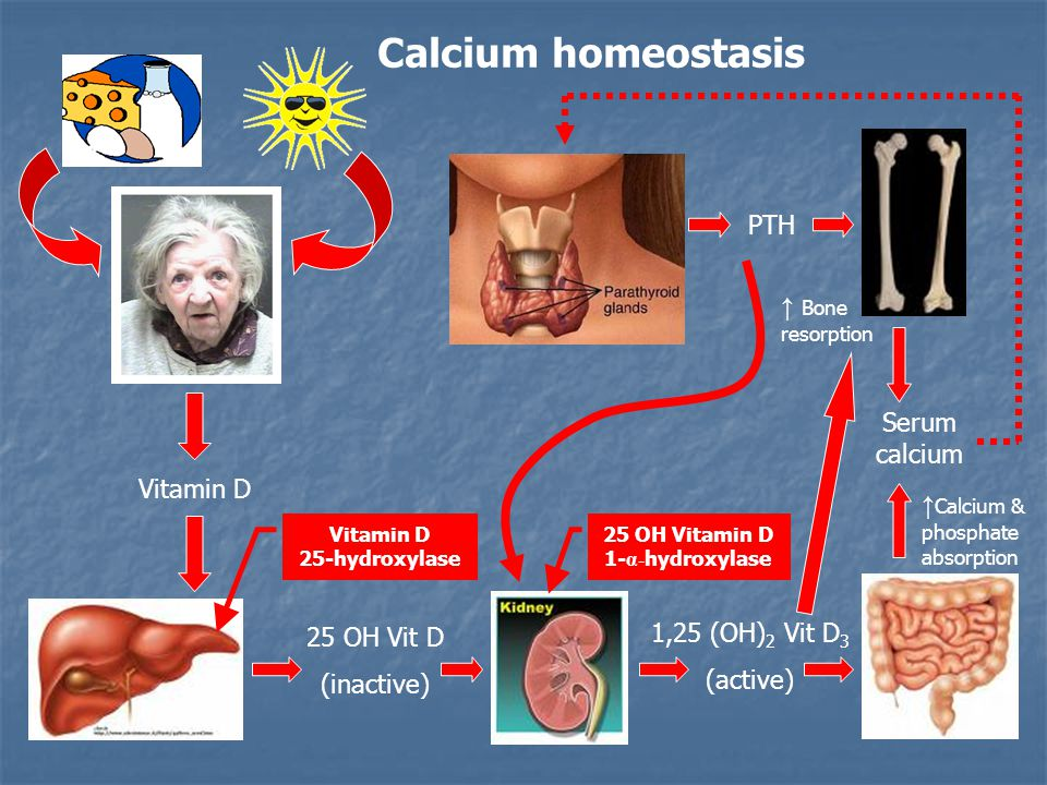 Calcium homeostasis Vitamin D 25 OH Vit D (inactive) 1,25 (OH) 2 Vit D 3 (active) Vitamin D 25-hydroxylase 25 OH Vitamin D 1- α- hydroxylase PTH Serum calcium ↑ Bone resorption ↑ Calcium & phosphate absorption