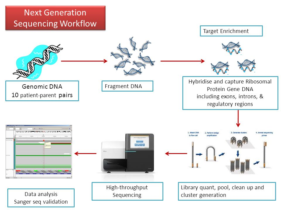 Next Generation Sequencing Workflow Genomic DNA 10 patient-parent pairs Fragment DNA Library quant, pool, clean up and cluster generation High-throughput Sequencing Data analysis Sanger seq validation Hybridise and capture Ribosomal Protein Gene DNA including exons, introns, & regulatory regions Target Enrichment