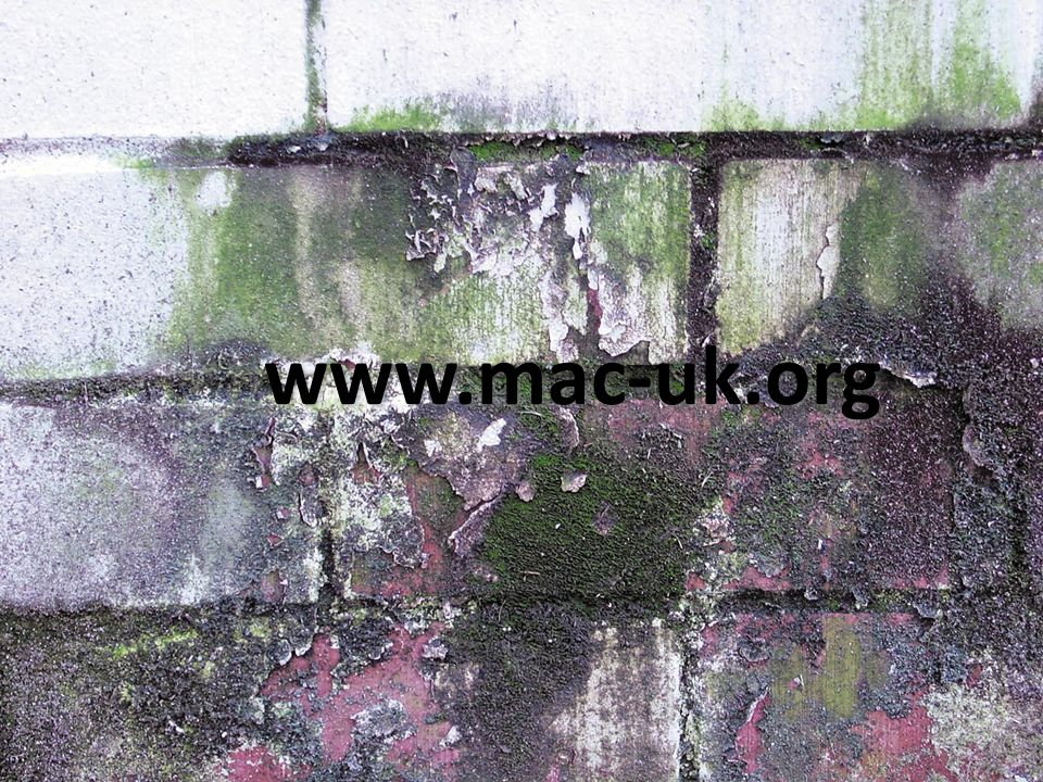 www.mac-uk.org