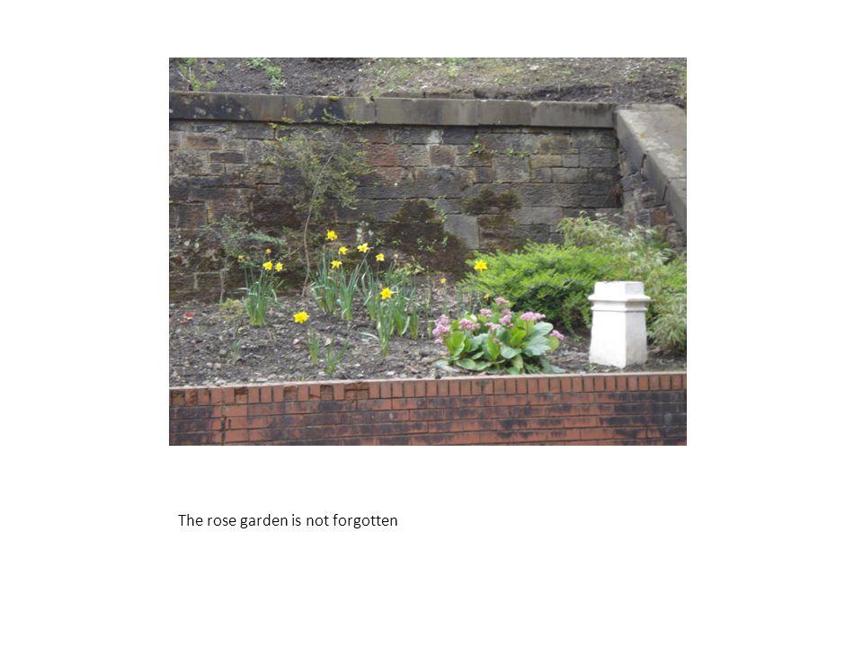 The rose garden is not forgotten