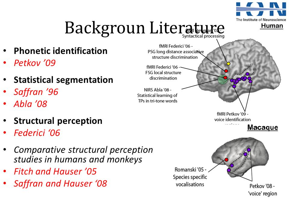 Backgroun Literature Phonetic identification Petkov '09 Statistical segmentation Saffran '96 Abla '08 Structural perception Federici '06 Comparative structural perception studies in humans and monkeys Fitch and Hauser '05 Saffran and Hauser '08