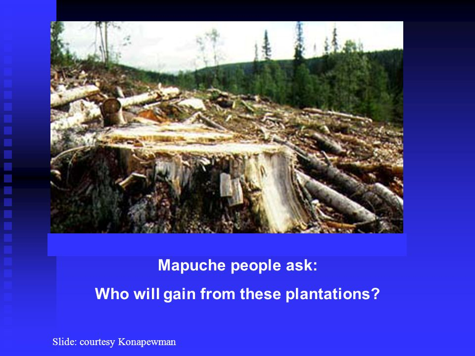 Mapuche people ask: Who will gain from these plantations Slide: courtesy Konapewman