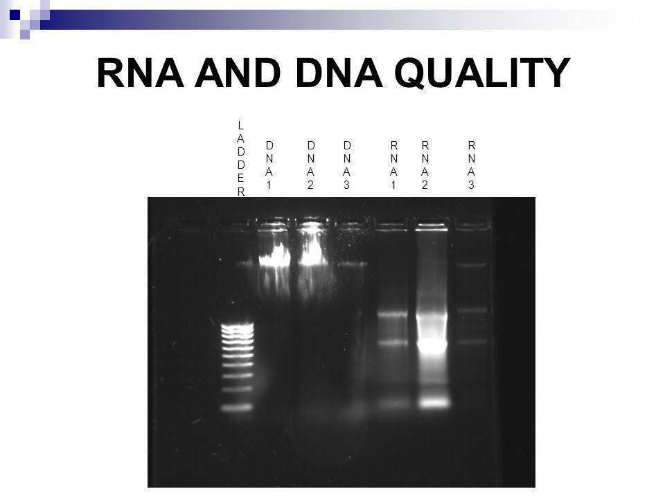 RNA AND DNA QUALITY LADDERLADDER DNA1DNA1 DNA2DNA2 DNA3DNA3 RNA1RNA1 RNA2RNA2 RNA3RNA3