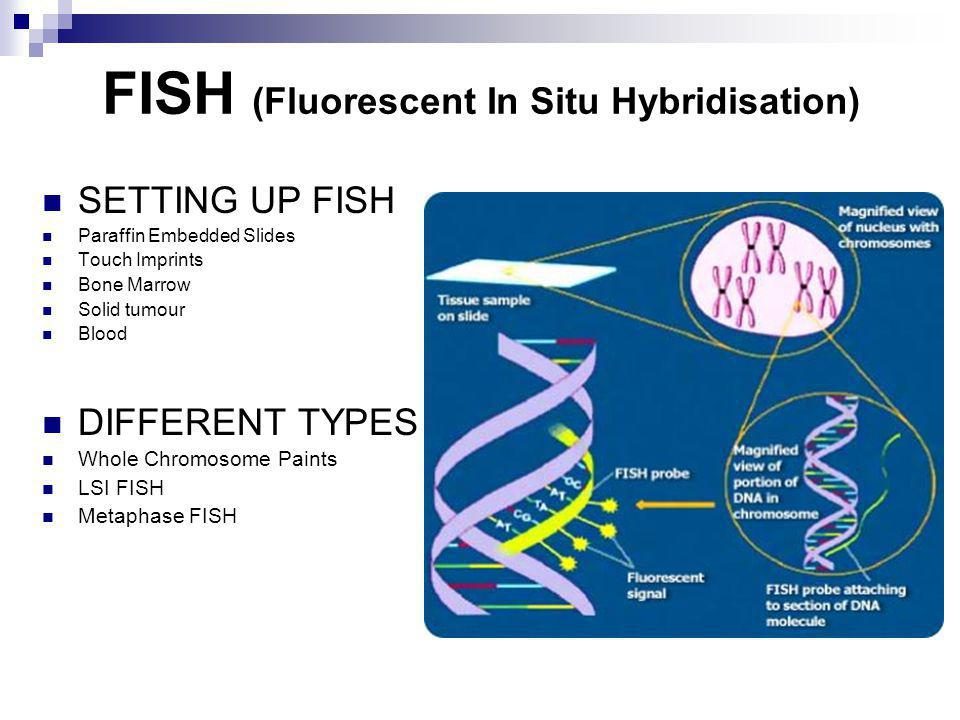 FISH (Fluorescent In Situ Hybridisation) SETTING UP FISH Paraffin Embedded Slides Touch Imprints Bone Marrow Solid tumour Blood DIFFERENT TYPES Whole Chromosome Paints LSI FISH Metaphase FISH