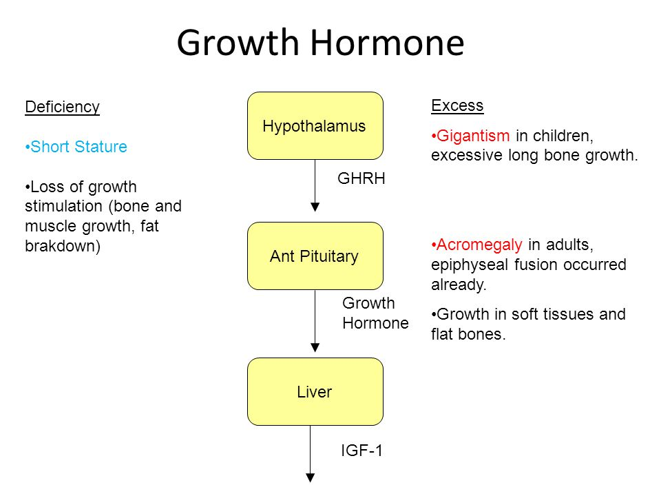 Growth Hormone Ant Pituitary Liver Hypothalamus GHRH Growth Hormone IGF-1 Deficiency Short Stature Loss of growth stimulation (bone and muscle growth,
