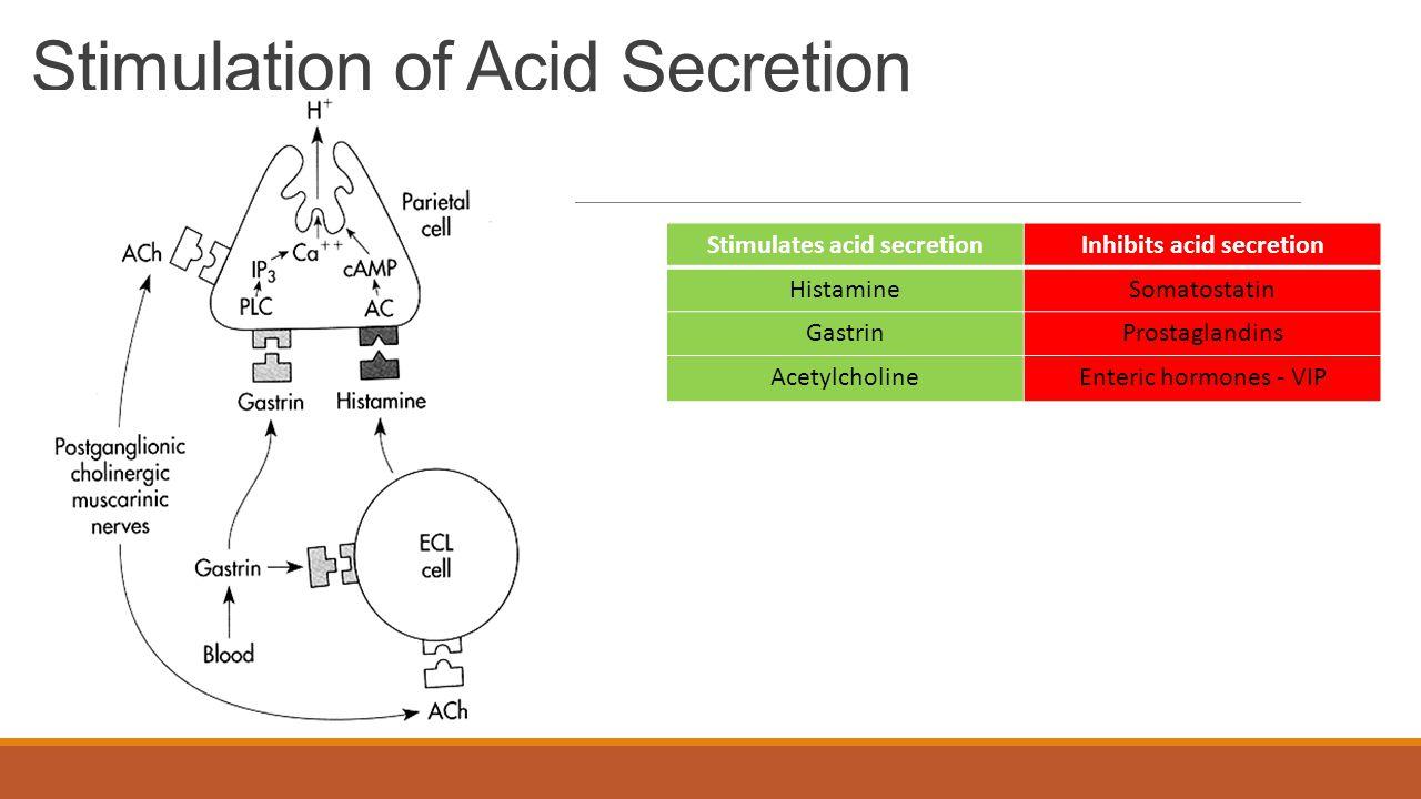 Stimulation of Acid Secretion Stimulates acid secretionInhibits acid secretion HistamineSomatostatin GastrinProstaglandins AcetylcholineEnteric hormones - VIP