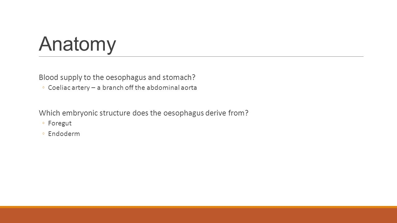 Anatomy Blood supply to the oesophagus and stomach.
