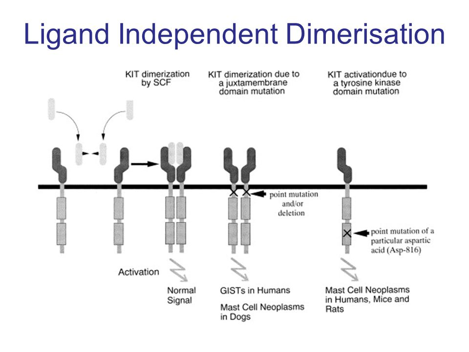 Ligand Independent Dimerisation
