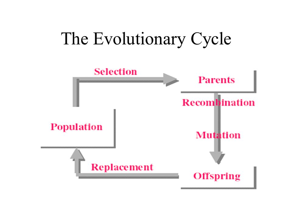 The Evolutionary Cycle