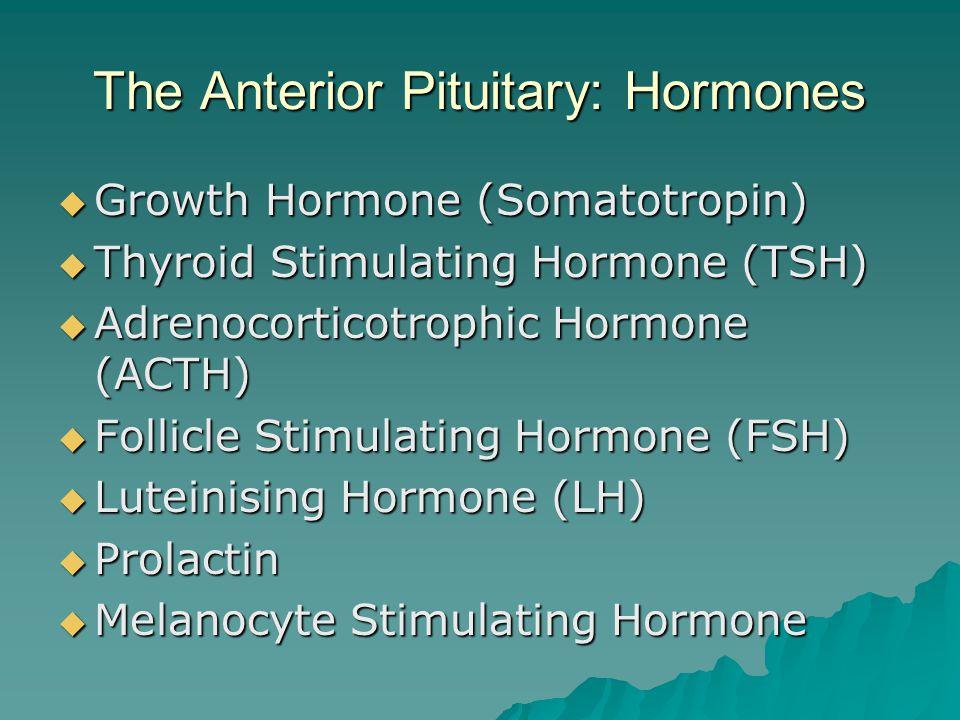 The Anterior Pituitary: Hormones  Growth Hormone (Somatotropin)  Thyroid Stimulating Hormone (TSH)  Adrenocorticotrophic Hormone (ACTH)  Follicle