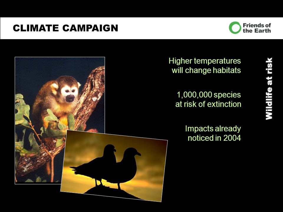 Wildlife at risk CLIMATE CAMPAIGN Higher temperatures will change habitats 1,000,000 species at risk of extinction Impacts already noticed in 2004