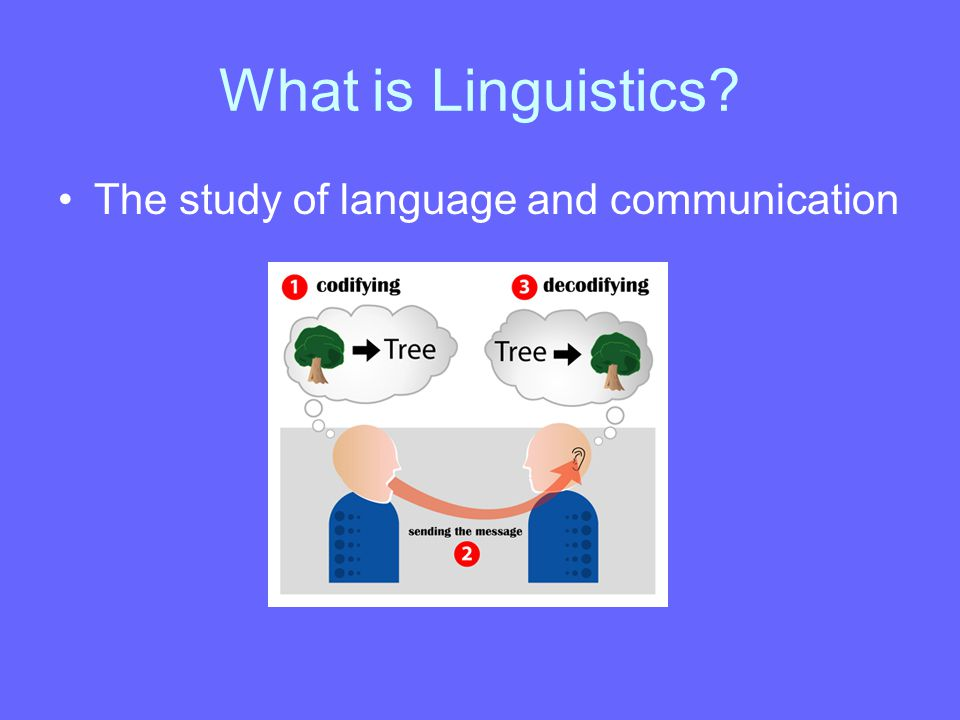 What is Linguistics? The study of language and communication