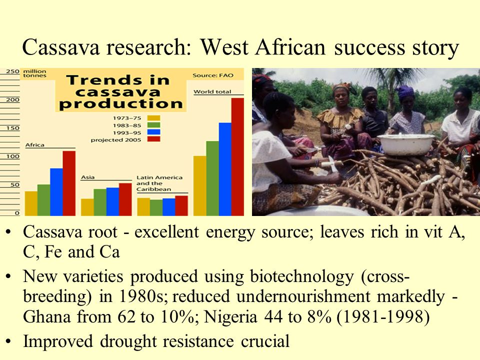 Cassava research: West African success story Cassava root - excellent energy source; leaves rich in vit A, C, Fe and Ca New varieties produced using b