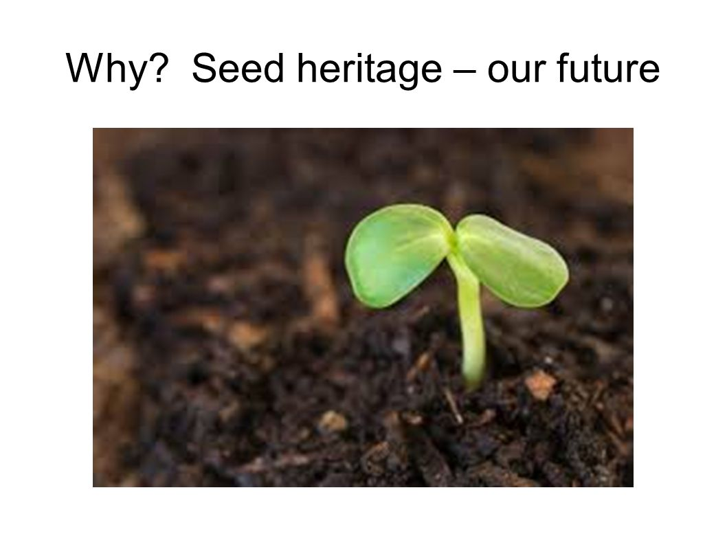 Why Seed heritage – our future