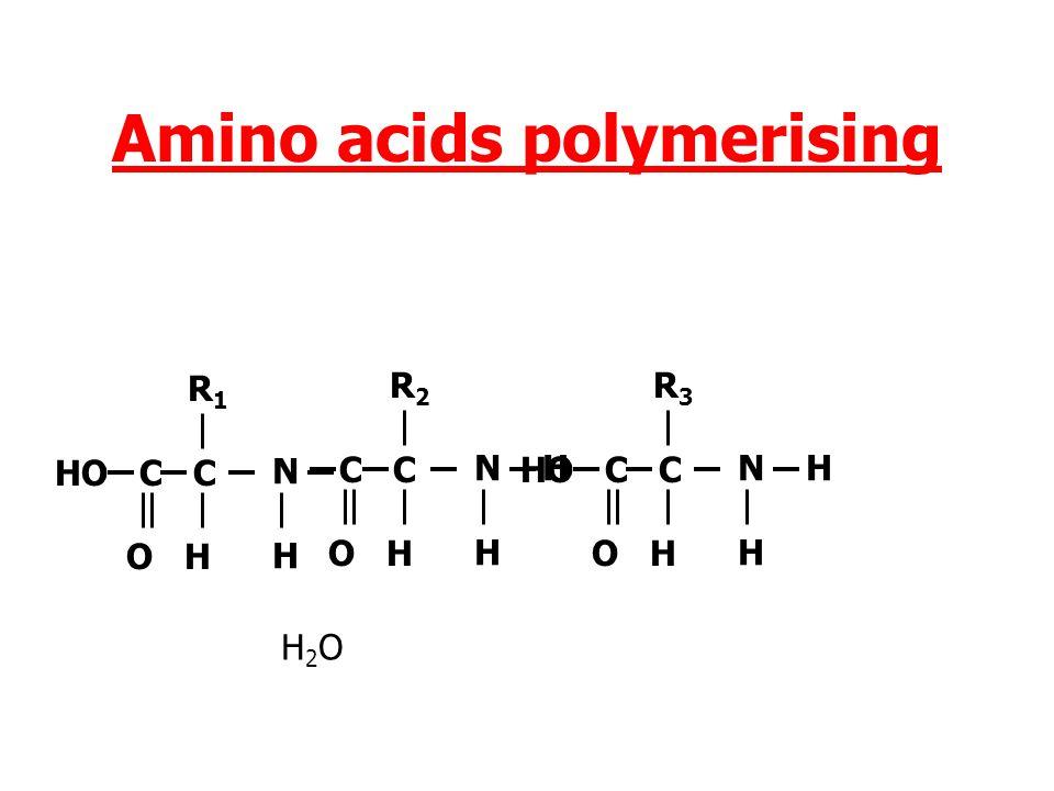 Amino acids polymerising N H H R 1 HO C C O H N H H R 2 HO C C O H