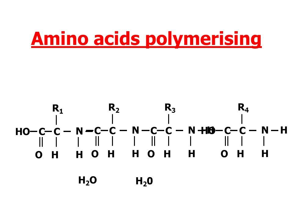 Amino acids polymerising NHNH R 1 HO C C O H N H H R 2 C C O H H2OH2O N H H R 3 HO C C O H