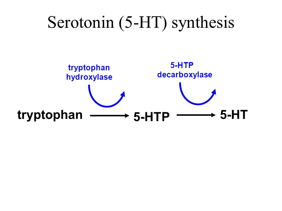 tryptophan Serotonin (5-HT) synthesis 5-HTP 5-HT tryptophan hydroxylase 5-HTP decarboxylase