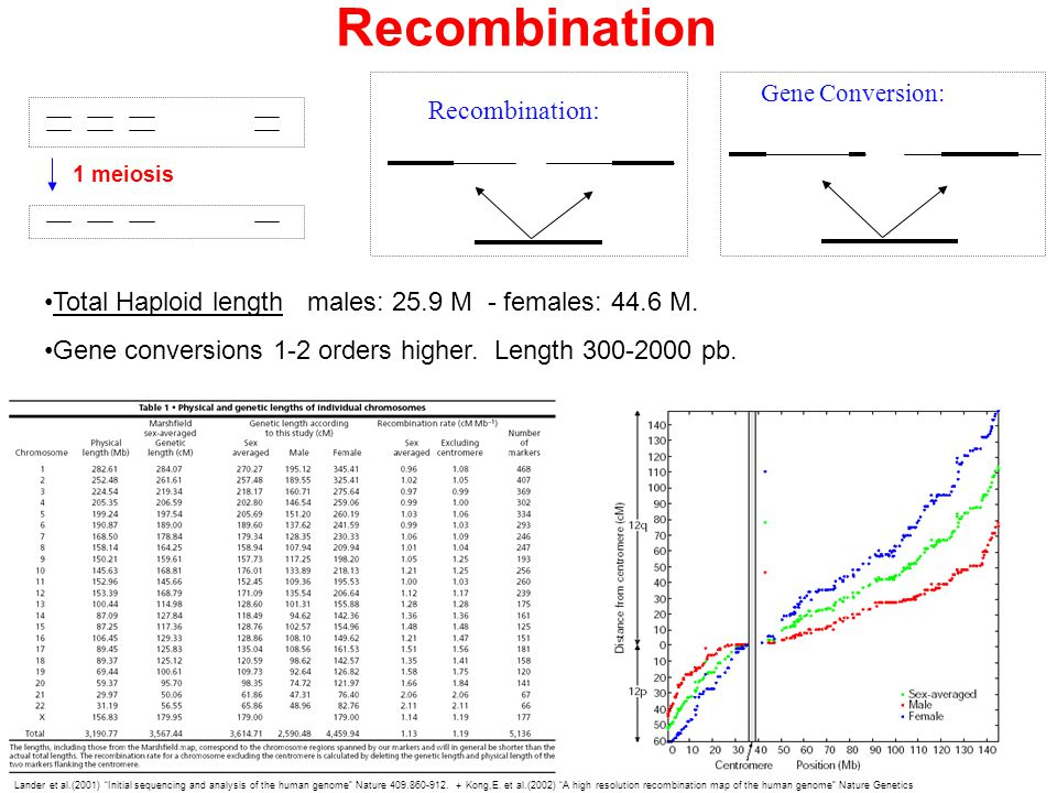 Recombination 1 meiosis Lander et al.(2001) Initial sequencing and analysis of the human genome Nature 409.860-912.