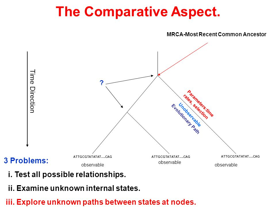 observable Parameters:time rates, selection Unobservable Evolutionary Path observable MRCA-Most Recent Common Ancestor .