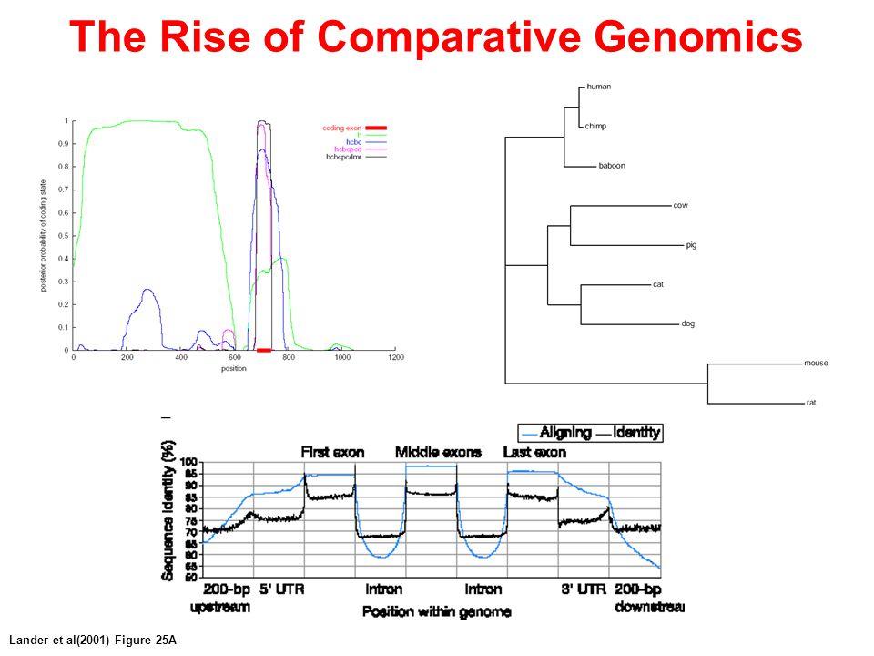 The Rise of Comparative Genomics Lander et al(2001) Figure 25A