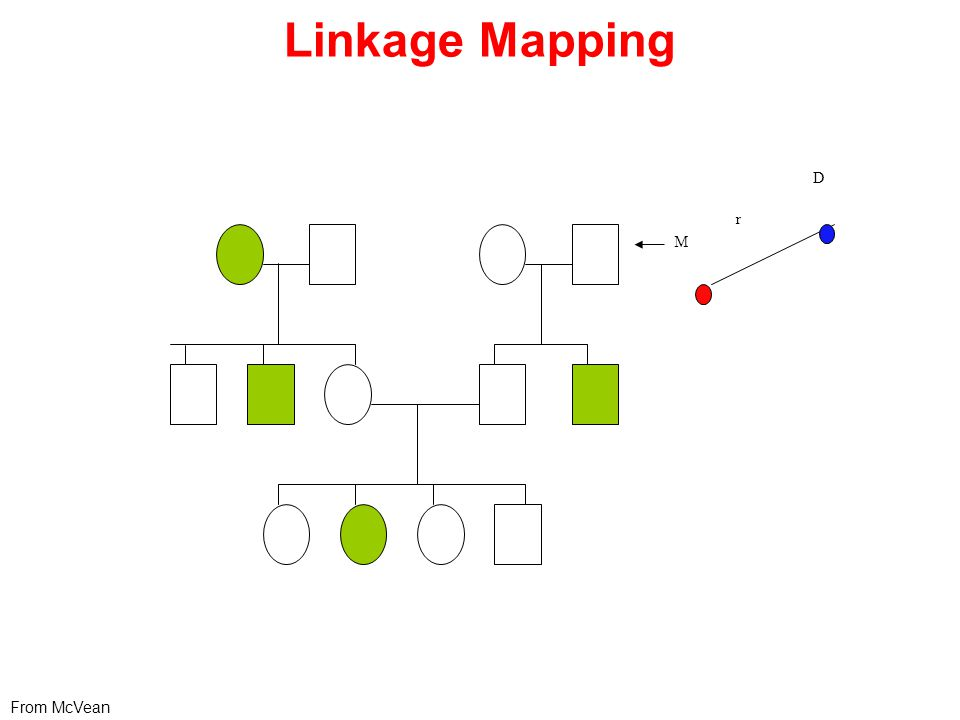 Linkage Mapping r M D From McVean