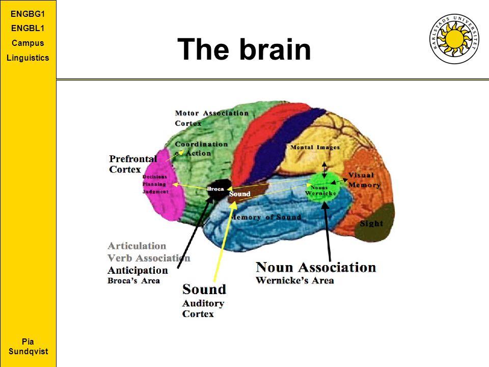 Pia Sundqvist ENGBG1 ENGBL1 Campus Linguistics The brain